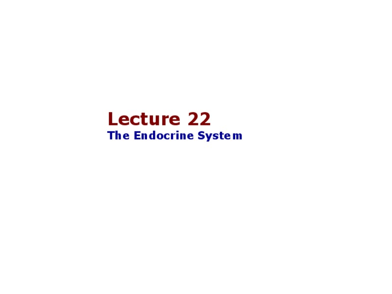 The Endocrine System Presentation