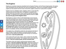The Euglena Worksheet