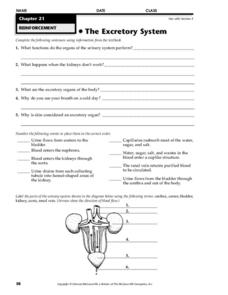 the excretory system worksheet for 9th higher ed lesson planet. Black Bedroom Furniture Sets. Home Design Ideas