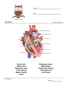 The Heart Worksheet