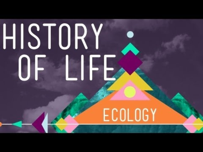 The History of Life on Earth Video