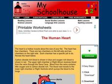 The Human Heart Interactive