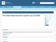 The Male Reproductive System Lesson Plan