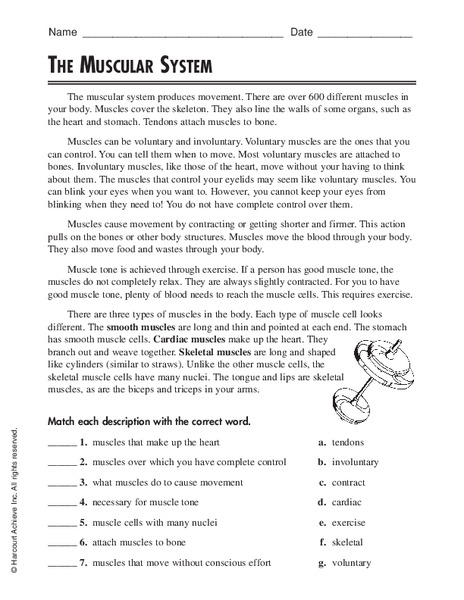 The Muscular System Worksheet For 5th Grade Lesson Planet