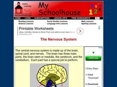 The Nervous System Interactive