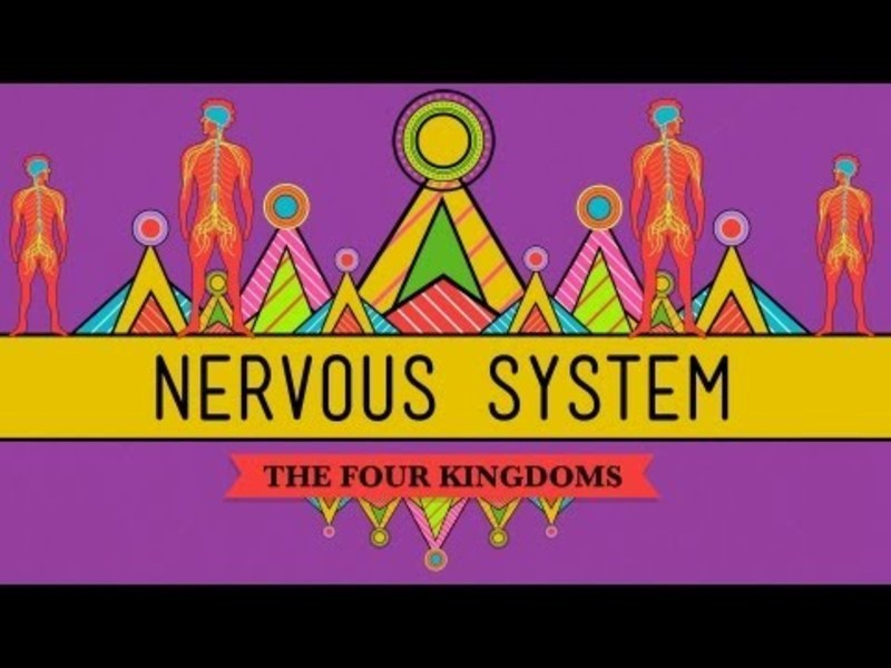 The Nervous System Video