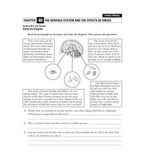 The Nervous System and the Effects of Drugs Worksheet