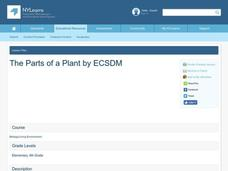 The Parts of a Plant Lesson Plan