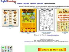 Animal Homes Interactive