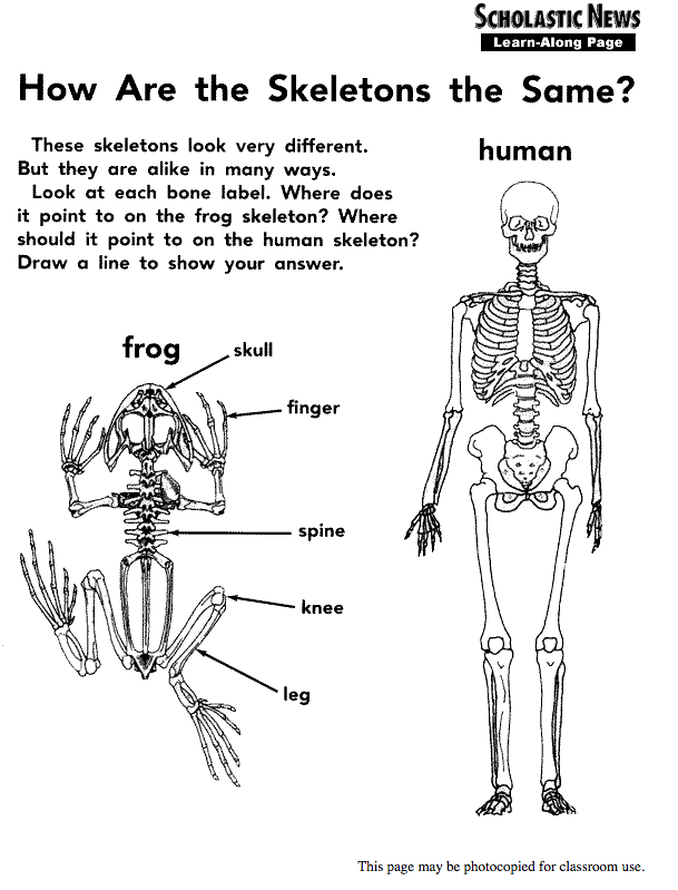 How Are the Skeletons the Same? Handouts & Reference