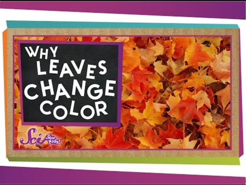 Why Do Leaves Change Colors in the Fall? Video