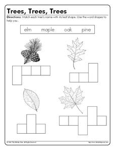 Trees, Trees, Trees Worksheet