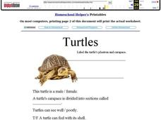 Turtles Worksheet
