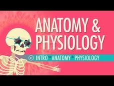 Introduction to Anatomy and Physiology Video