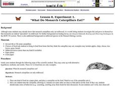 What Do Monarch Caterpillars Eat? Lesson Plan