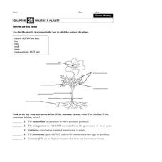 What is a Plant? Worksheet