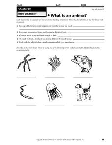 What is an animal? Worksheet