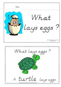 What Lays Eggs? Lesson Plan