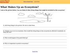 What Makes Up an Ecosystem? Worksheet