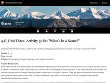 What's in a Name? Lesson Plan