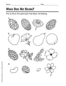 Which Does Not Belong? Worksheet