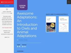 Awesome Adaptations Lesson Plan