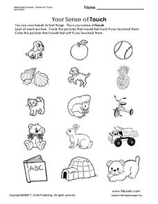 Your Sense of Touch Worksheet