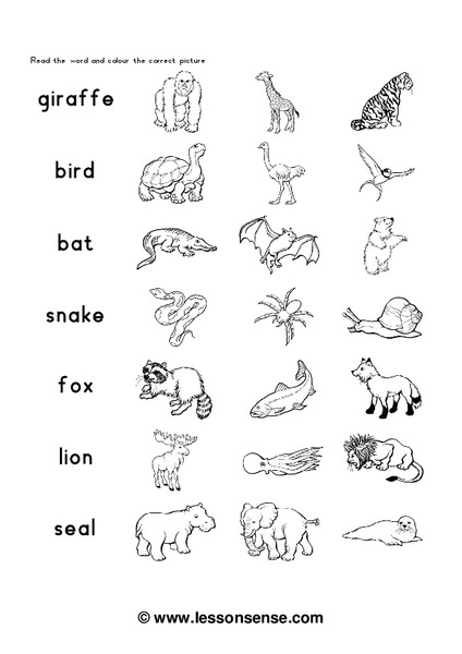 Zoo Animals Worksheet for 1st - 3rd Grade   Lesson Planet