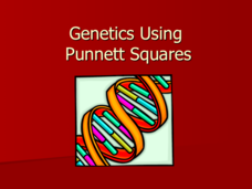 Genetics Using Punnett Squares Presentation