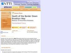 South of the Border Down Brooklyn Way Lesson Plan