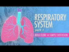 Respiratory System (Part 1) Video