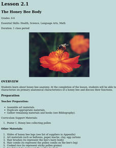 The Honey Bee Body Research Lesson Plan