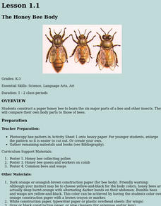 The Honey Bee Body - Paper Honey Bee Lesson Plan