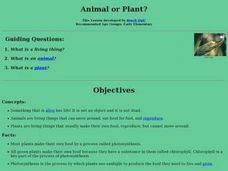 Animal or Plant? Lesson Plan