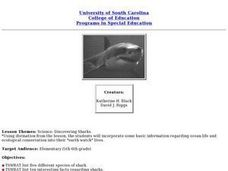 Science: Discovering Sharks Lesson Plan