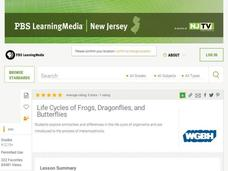 Life Cycles of Frogs, Dragonflies, And Butterflies Lesson Plan